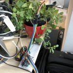 Bodenfeuchte-Sensor mit Arduino und LoRaWAN